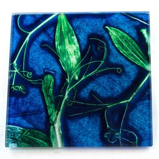 Blue Sweet Curves Botanic Style Glass Coaster