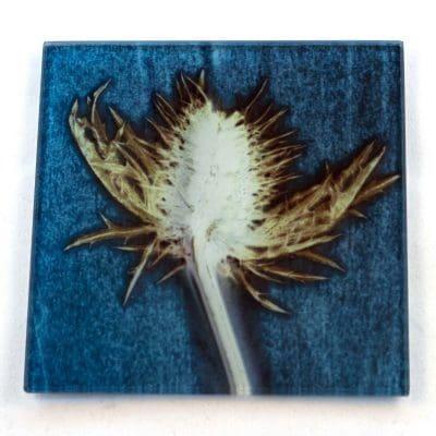Blue Thistle Botanic Style Glass Coaster