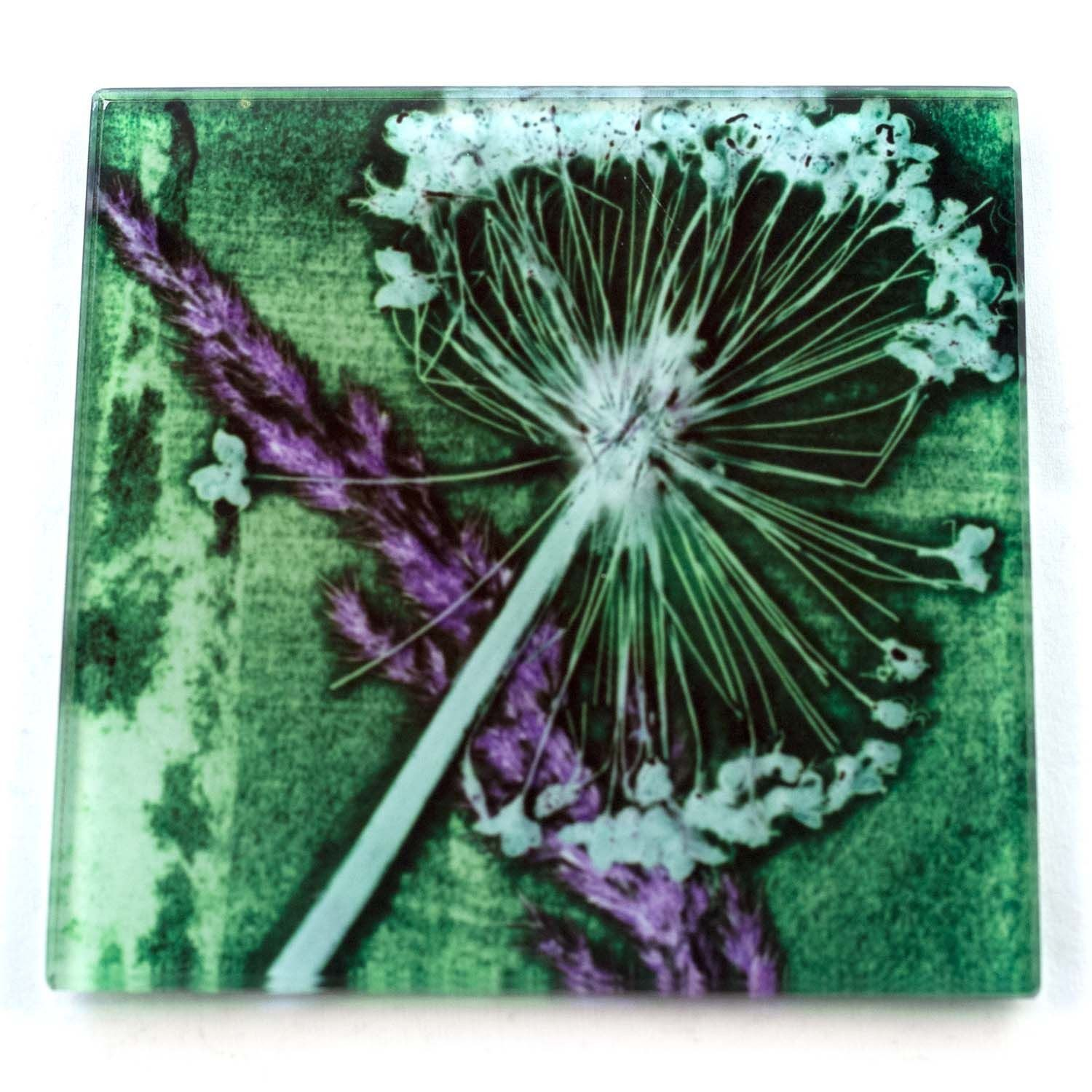 Green Allium Rush Botanic Style Glass Coaster