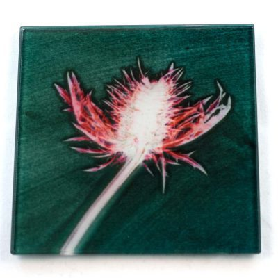 Green Thistle Botanic Style Glass Coaster