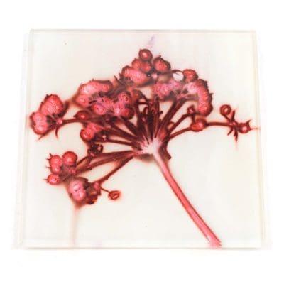 Joyous Spread 2 Botanic Style Glass Coaster