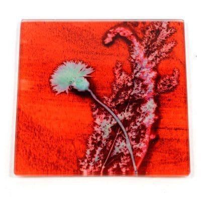 Red Grass Sympathy Botanic Style Glass Coaster