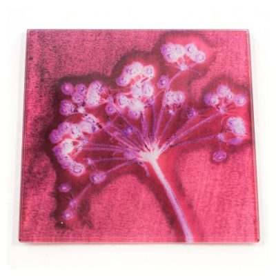 Romantic Pink Joyous Spread Botanic Style Glass Coaster