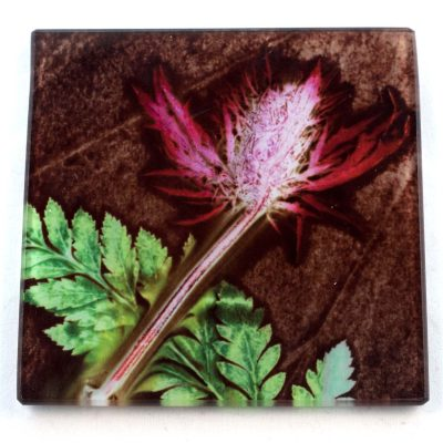 Thistle and Fern Earth Botanic Style Glass Coaster