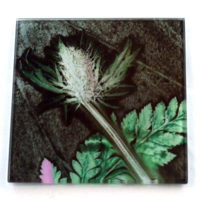 Thistle and Fern Sage Botanic Style Glass Coaster