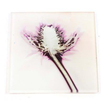 X-Ray Thistle Botanic Style Glass Coaster