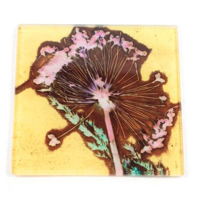 Yellow Allium Rush Botanic Style Glass Coaster