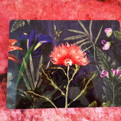 Midnight Bloom Place Mats